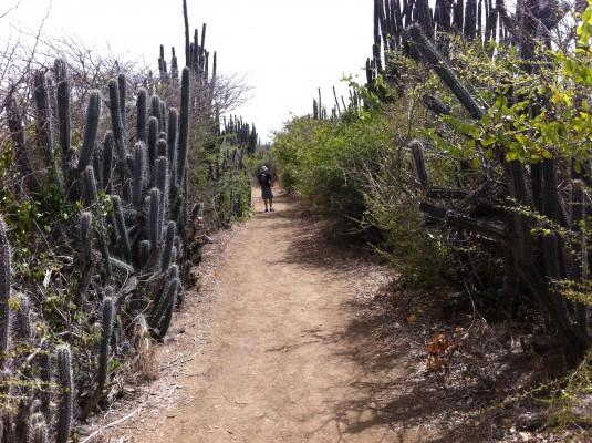 Vereda hacia el faro de Reserva Natural Caja de Muerto (José Coss Charriez)