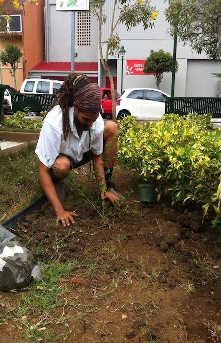 Los espacios escogidos para los árboles deben cumplir con los requisitos necesarios para que la planta crezca de forma optima. (Suministrada)
