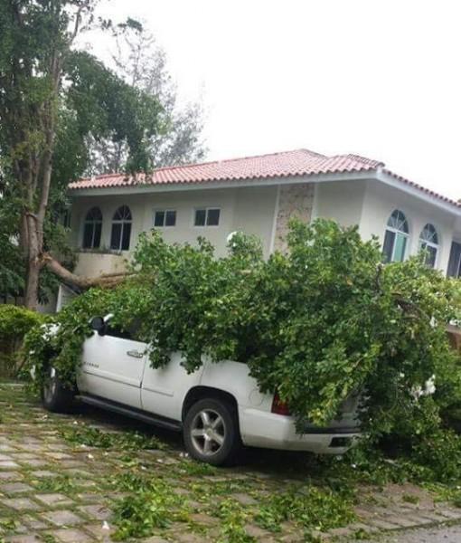 En Bávaro en la República Dominicana ya se reportan árboles caídos. (Victor de la Cruz)