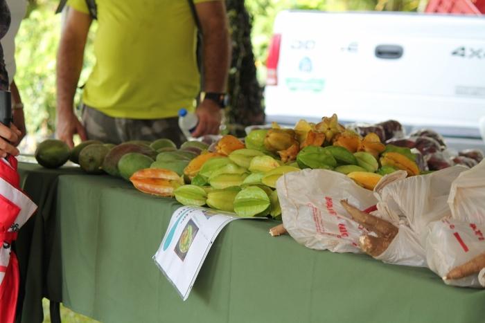 Algunas de las frutas que llevó a la actividad la Estación Experimental de la UPR. (Michelle Estades/ Diálogo)