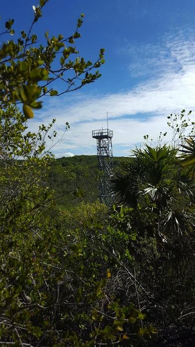 Torre de Neon Bosque seco Guánica