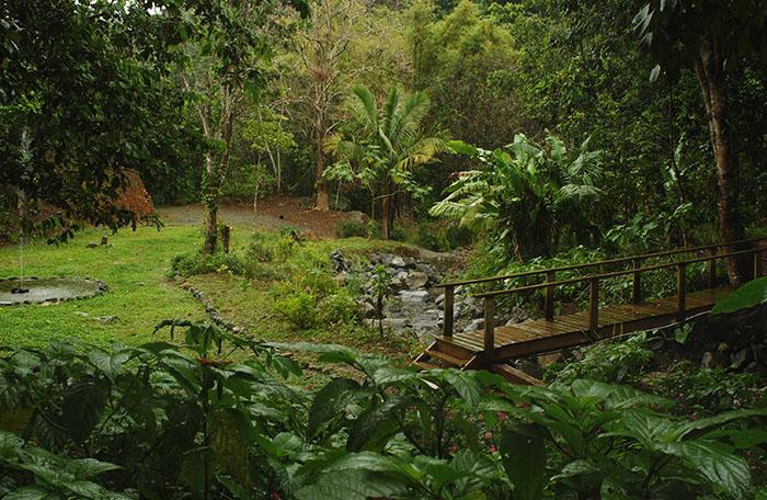 Bosque La Olimpia, en Adjuntas/abril 2006/foto por Ricardo Alcaraz Díaz
