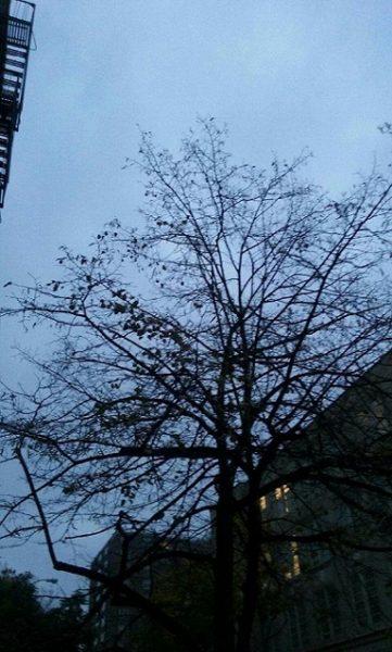 Así amaneció el cielo de Nueva York el día de las elecciones, seg♪n pudo captar la cámara del celular de la autora. Gris y pico. (suministrada)