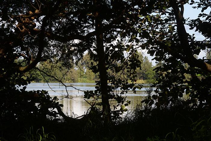 Justo frente al local, yace un lago que podría convertirse en el escenario de paseos en kayak para niños loiceños gracias a este proyecto comunitario. (Ricardo Alcaraz/Diálogo)