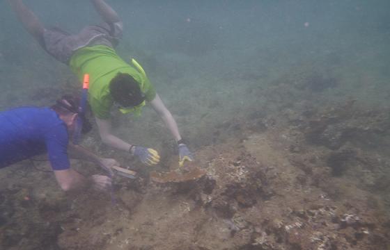 Franceses corales